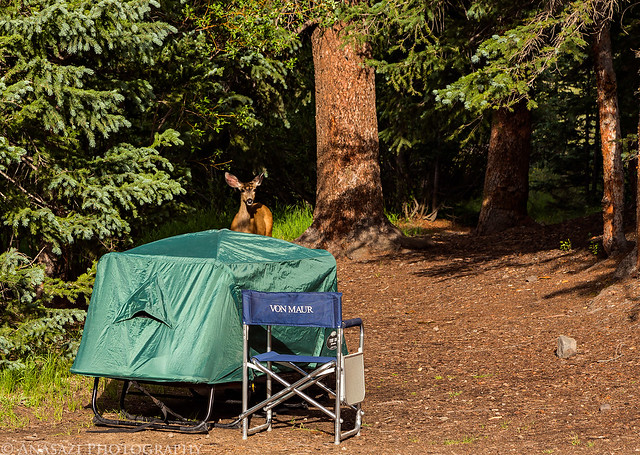 Camp Visitor