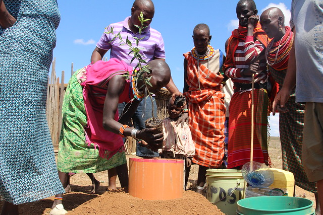 Community tree planting in the semi-arid Samburu, mostly around the manyattas to ensure protection from destruction by livestock