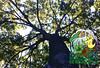 Pinterest in da tree