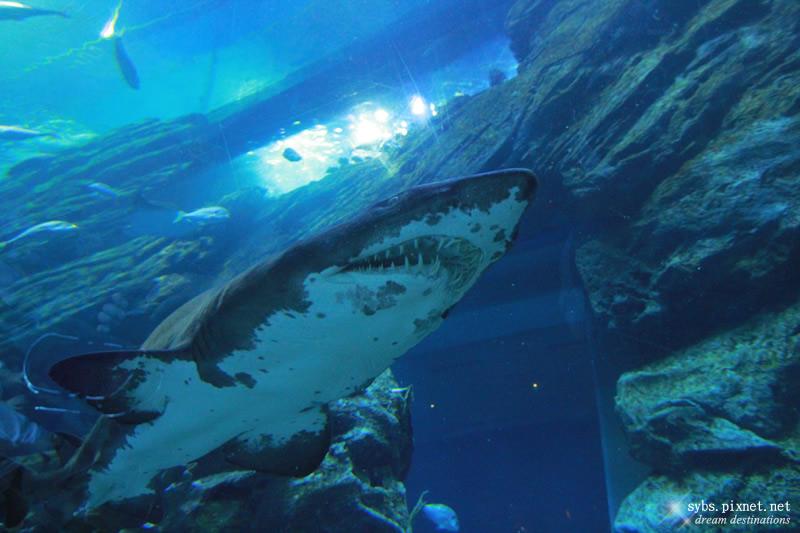 海底可怕照片大全