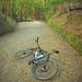 Climbing Mt Wakakusa. Nara, Japan. by kinkicycle.com