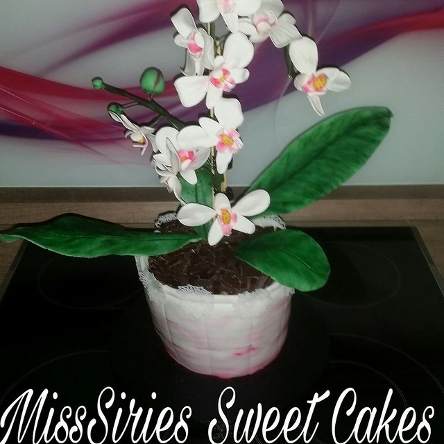 Flower in a Pot Cake by MissSiries Sweet Cakes