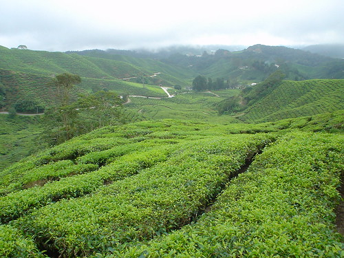 Cameron Highlands view