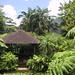 Martinique - Jardins de Balata ©Spigoo
