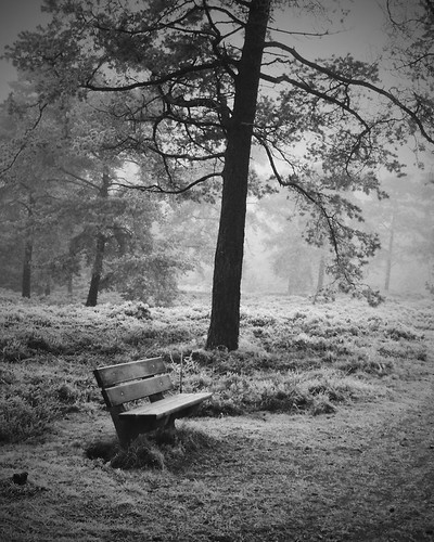 lonely bench in B&W