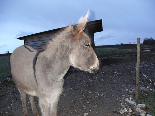 My cousin's donkey