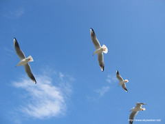 I want to fly as a sea gull.