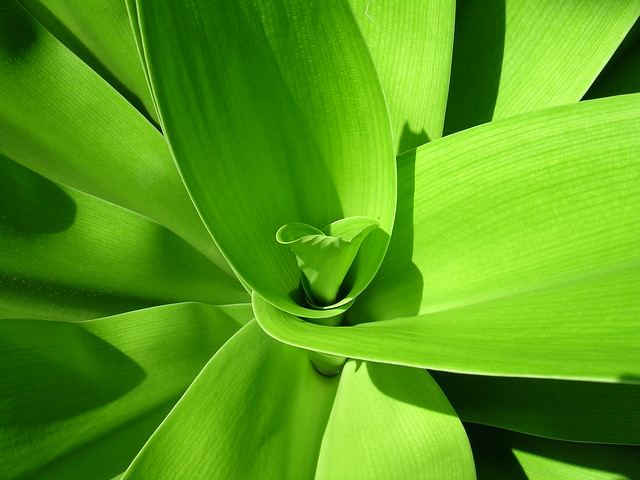 Green layers - fave of the day =)