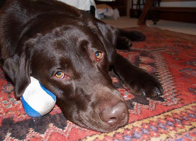 Dog Hurt Paw