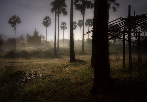 Bagan - foggy sunrise through palms