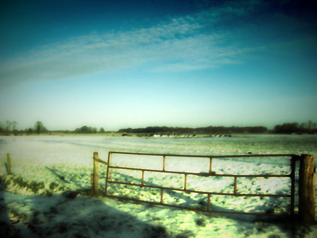 holga winterlandscape