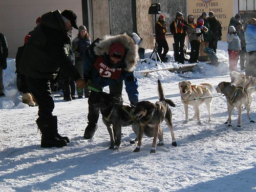 4798190 52b8502820 Nice Sled Dog Racing photos
