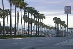 Morning Mountains through Palm Trees