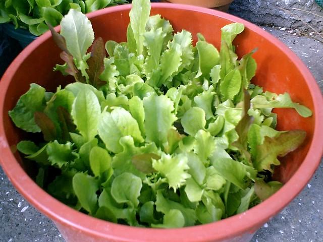 My Vege Garden