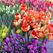 Tulips at Pike Place Market by Colour