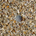 Sea Shells by Josh Knoflook