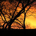 Daybreak Rapture by suertudo