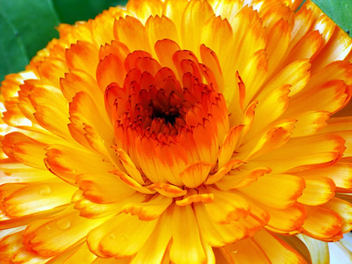Bright Yellow Flower | Flickr - Photo Sharing!