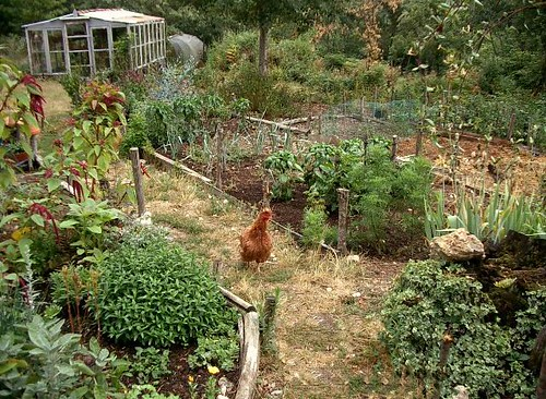 Garden chicks and herbs