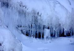 winter, ice, icicle, freezing,
