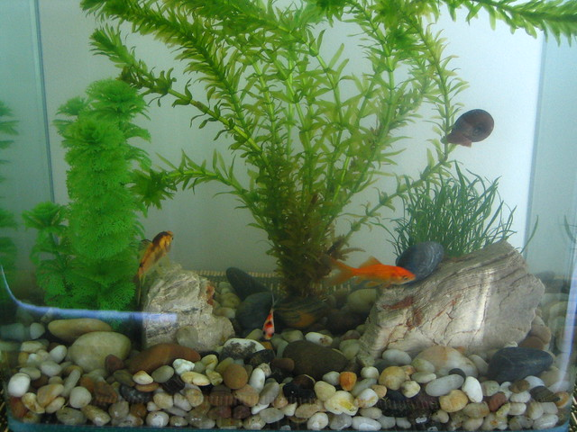 Fish Tank Our new fish tank, with four occupants .. see no ...