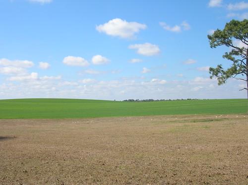 landscape florida farm fl archer