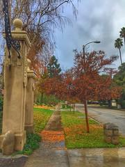 My morning walk 🐾🍁👣
