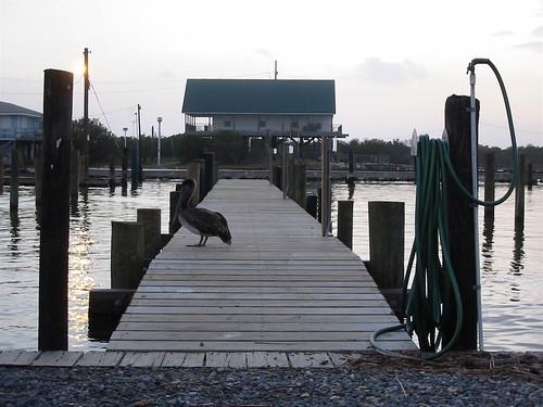Pelican & Dock