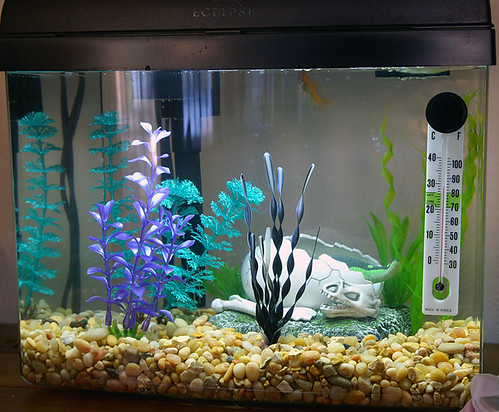 An aquarium makes a beautiful addition to any home