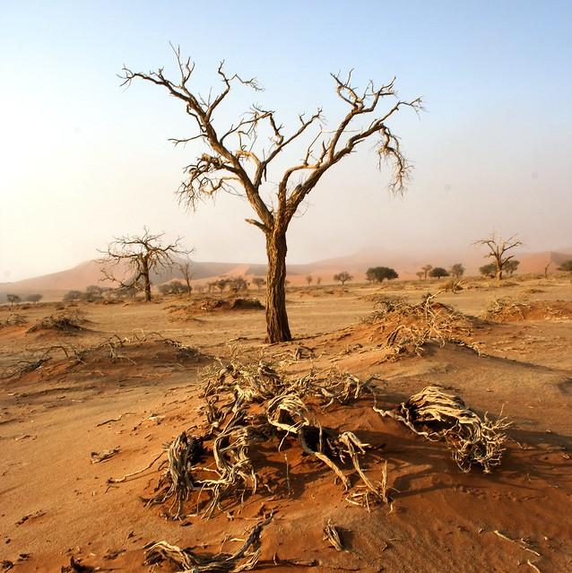 Mientras tanto, en Africa