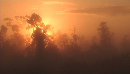 sunrise sunset color indonesia borneo jungle palmoil cockroachproductions documentary