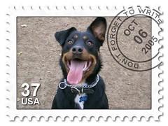 dog breed, dog, picture frame, postage stamp, pet,