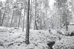 forest_snow