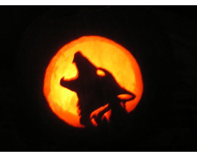 Wolf pumpkin flickr photo sharing