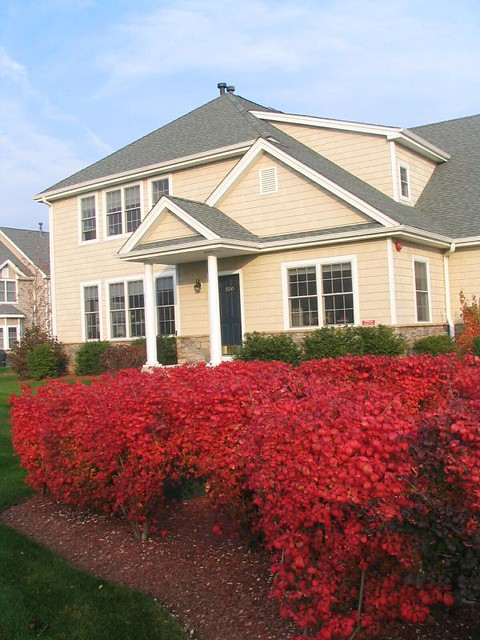 Red Bushes In Front Of Our House Flickr Photo Sharing