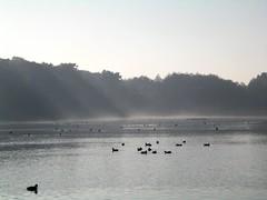 Water birds Pen Ponds Richmond Park
