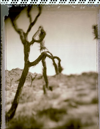 Joshua Tree National Park - Polaroid Type 55