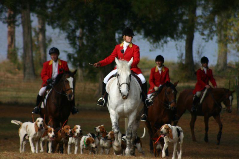 Fox Hunting 2005