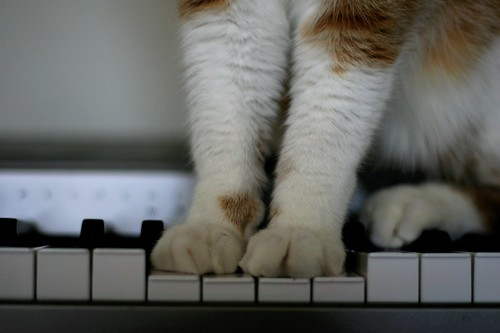 Play Me A Tune Kitty