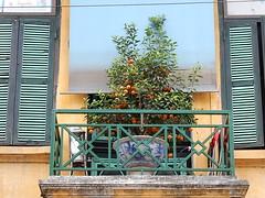 Fruit Tree on Balcony