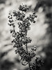 Lone Flower #1