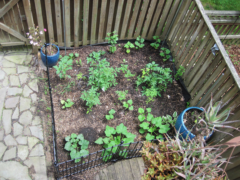 Garden Right, Early Spring. Square garden bed with young plants and two turquoise pots at opposite corners. 2 sides wood fence, 2 sides metal fence.