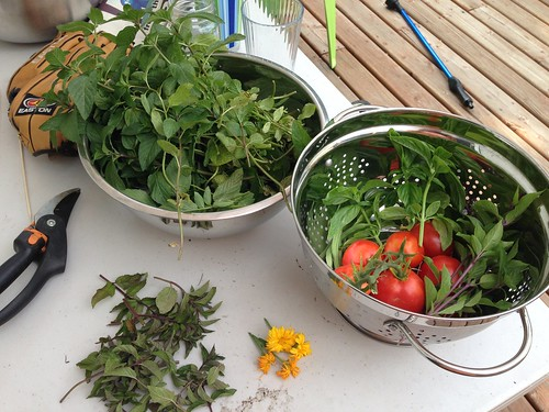 Tomatoes, basil, cinnamon basil, three green beans, super minty mint, chocolate mint, and calendula flowers.