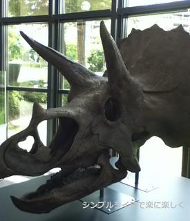 人と自然の博物館トリケラトプス