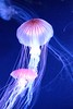 Jellys by MikeDs Photography