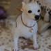"MINI'S SECRET ~  Needle Felted Dog ""Chihuahua"" 羊毛氈高擬真- 吉娃娃犬 by 呻吟"