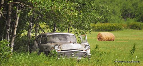 old trees green cars abandoned grass rust gm rusty manitoba vehicles transportation haybales beaters generalmotors clunkers ruralexploration sirko rustbuckets rurex 1956buickspecial buickmotordivision