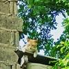 el Mono #cats