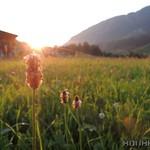 2015_Tirol_092