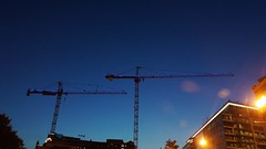 DC Dance of the Cranes 59112